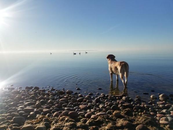 Лето, пляж и купание - советы для владельцев собак