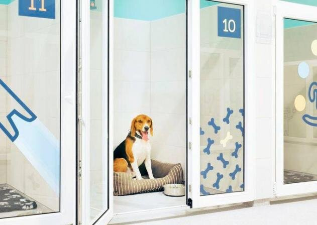 PetCity дает отпуск медицинским работникам