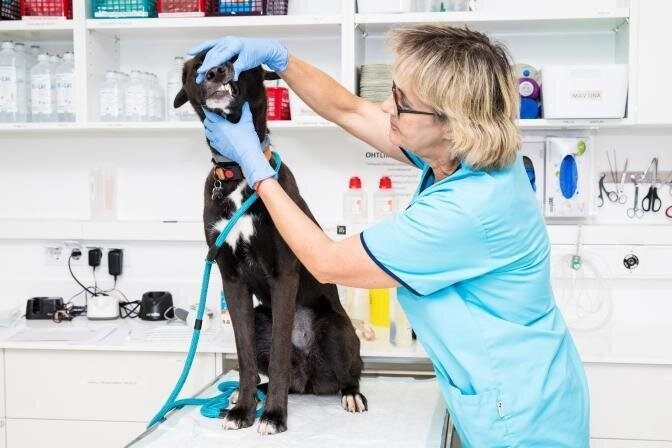 Клиники PetCity – это лечение домашних животных на пятизвездочном уровне